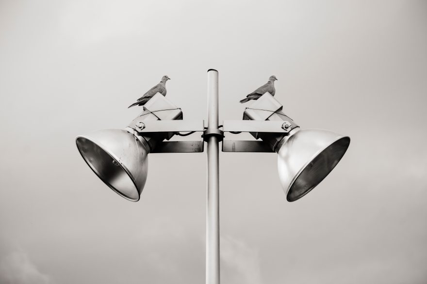 Two pigeons on a lamp post