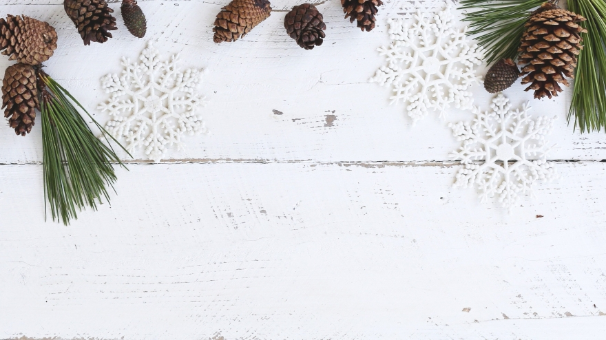 White wood background with pinecones